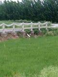 Alberi e piante verdi Fotografia Stock
