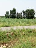 Alberi e piante verdi immagine stock libera da diritti