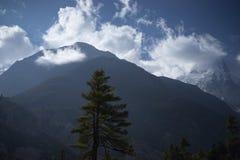 Alberi e picco snowcapped a fondo nelle montagne dell'Himalaya, Nepal Fotografie Stock Libere da Diritti