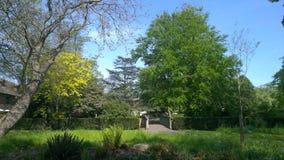 Alberi e ponte verdi Immagine Stock
