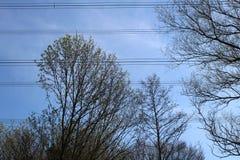 Alberi e powerlines contro skye blu Immagine Stock Libera da Diritti