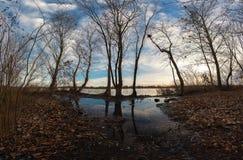 Alberi e pozze costieri sulla riva in autunno tardo Immagine Stock