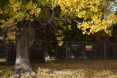 Alberi e recinti di caduta Immagine Stock Libera da Diritti
