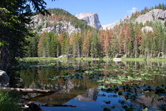 Alberi e riflessione delle montagne Fotografia Stock
