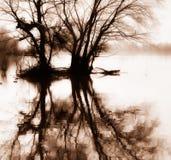 Alberi e riflessione nella seppia Fotografia Stock