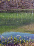 Alberi e riflessioni della collina sul fiume di Grza in Serbia Immagini Stock Libere da Diritti
