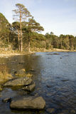 Alberi e rocce da un lago Fotografie Stock Libere da Diritti