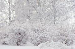 Alberi e snowbank degli arbusti Fotografia Stock Libera da Diritti