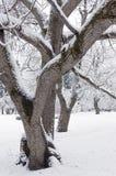 Alberi e snowbank degli arbusti Immagini Stock Libere da Diritti