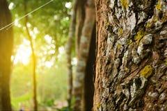Alberi e sole di mattina immagini stock