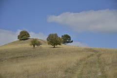 Alberi e strada campestre sopra la collina in autunno in anticipo Immagini Stock Libere da Diritti