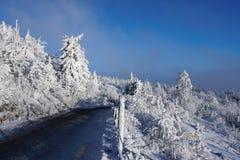 Alberi e strada dello Snowy Immagine Stock