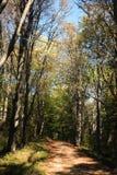 Alberi e strada piacevoli nella foresta di autunno Fotografia Stock