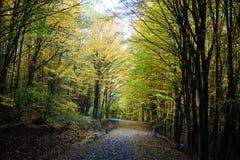 Alberi e strada piacevoli nella foresta di autunno Fotografia Stock Libera da Diritti