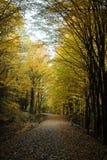 Alberi e strada piacevoli nella foresta di autunno Immagine Stock