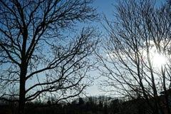 Alberi e tronco di alberi nel campo nel giorno di molla soleggiato, fondo della natura Immagine Stock Libera da Diritti