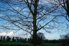 Alberi e tronco di alberi nel campo nel giorno di molla soleggiato, fondo della natura Fotografie Stock