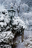Alberi e un indicatore luminoso nella neve dei ths Fotografia Stock