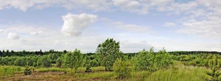 Alberi e vento Fotografia Stock Libera da Diritti
