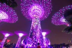 Alberi eccellenti ai giardini di Singapore dalla baia Immagini Stock Libere da Diritti