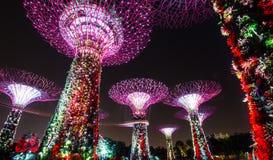 Alberi eccellenti ai giardini di Singapore dalla baia Fotografia Stock