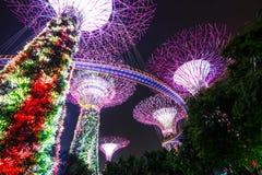 Alberi eccellenti ai giardini di Singapore dalla baia Fotografie Stock