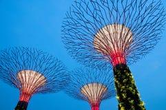 Alberi eccellenti a Singapore Fotografia Stock