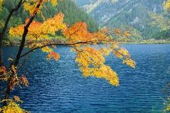 Alberi ed acqua in autunno Jiuzhai Immagine Stock Libera da Diritti
