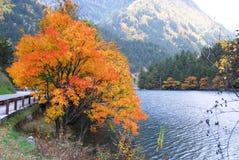 Alberi ed acqua in autunno Jiuzhai Fotografia Stock