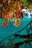 Alberi ed acqua in autunno Jiuzhai Fotografia Stock Libera da Diritti