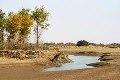 Alberi ed acqua in deserto Fotografia Stock Libera da Diritti