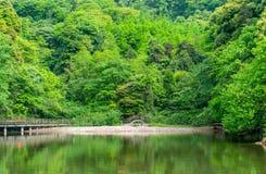 Alberi ed acqua verdi sul picco del castello Fotografia Stock Libera da Diritti