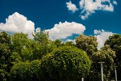 Alberi ed arbusti Fotografie Stock Libere da Diritti
