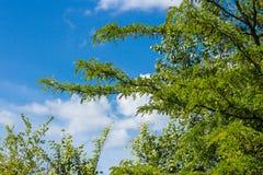 Alberi ed arbusti contro il cielo blu fotografia stock libera da diritti