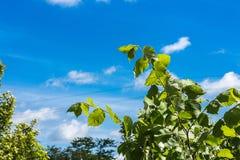 Alberi ed arbusti contro il cielo blu fotografia stock