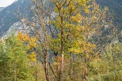 Alberi ed arbusti nei bei colori autunnali immagine stock