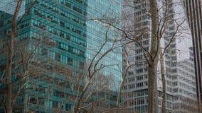 Alberi ed edifici per uffici Fotografia Stock Libera da Diritti