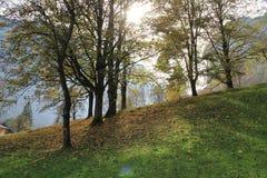 Alberi ed erba di autunno Fotografie Stock Libere da Diritti