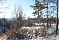 Alberi ed erba di Mountain View di inverno Fotografia Stock Libera da Diritti