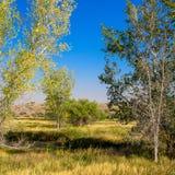 Alberi ed erbe di prateria in autunno nella riserva nazionale di Ouray fotografie stock libere da diritti