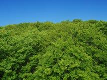 Alberi ed il cielo blu Fotografie Stock