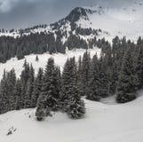 Alberi ed il paesaggio di inverno Fotografie Stock