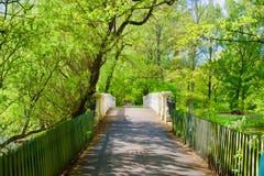 Alberi ed il ponte immagini stock
