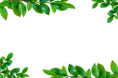 Alberi ed isolato verdi della pianta della foglia Immagini Stock Libere da Diritti