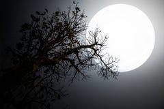 Alberi ed ombra di notte della luna Immagini Stock