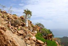 Isola di socotra immagine stock libera da diritti