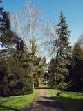Alberi, erba, banco e strada nel parco fotografie stock