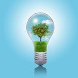 Alberi, erba e cielo nella lampadina Immagini Stock Libere da Diritti