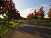 Alberi, erba e strada di autunno vicino alla cantina australiana Fotografia Stock Libera da Diritti
