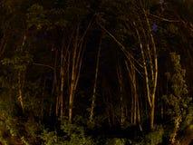 Alberi Fisheye di notte Fotografie Stock